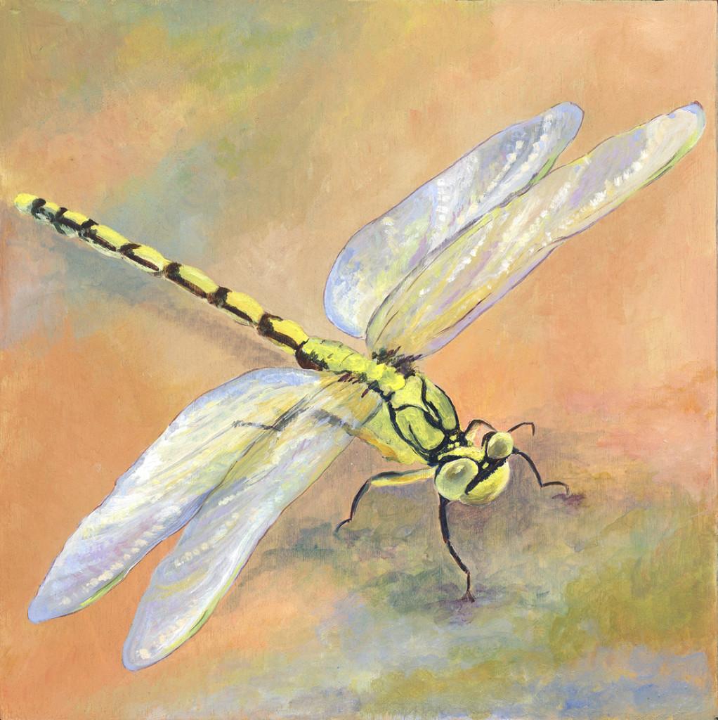 Dragonfly1100w